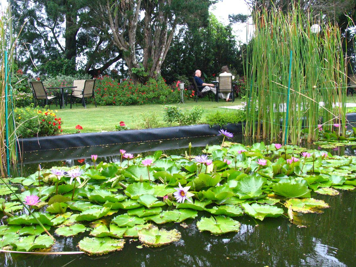 David Brown's lily pond