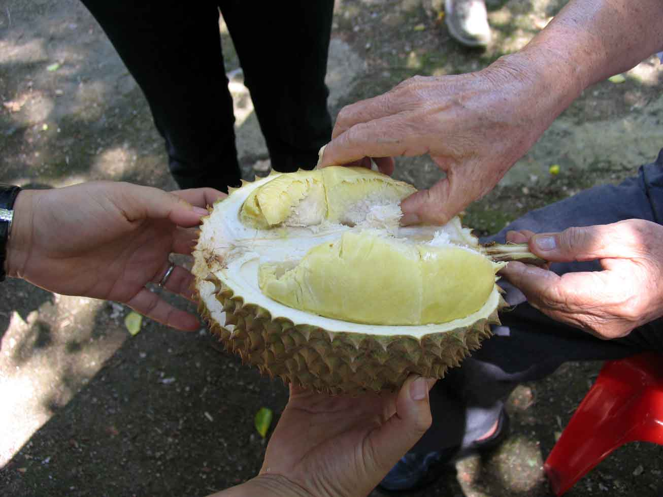 Uncle John's durians