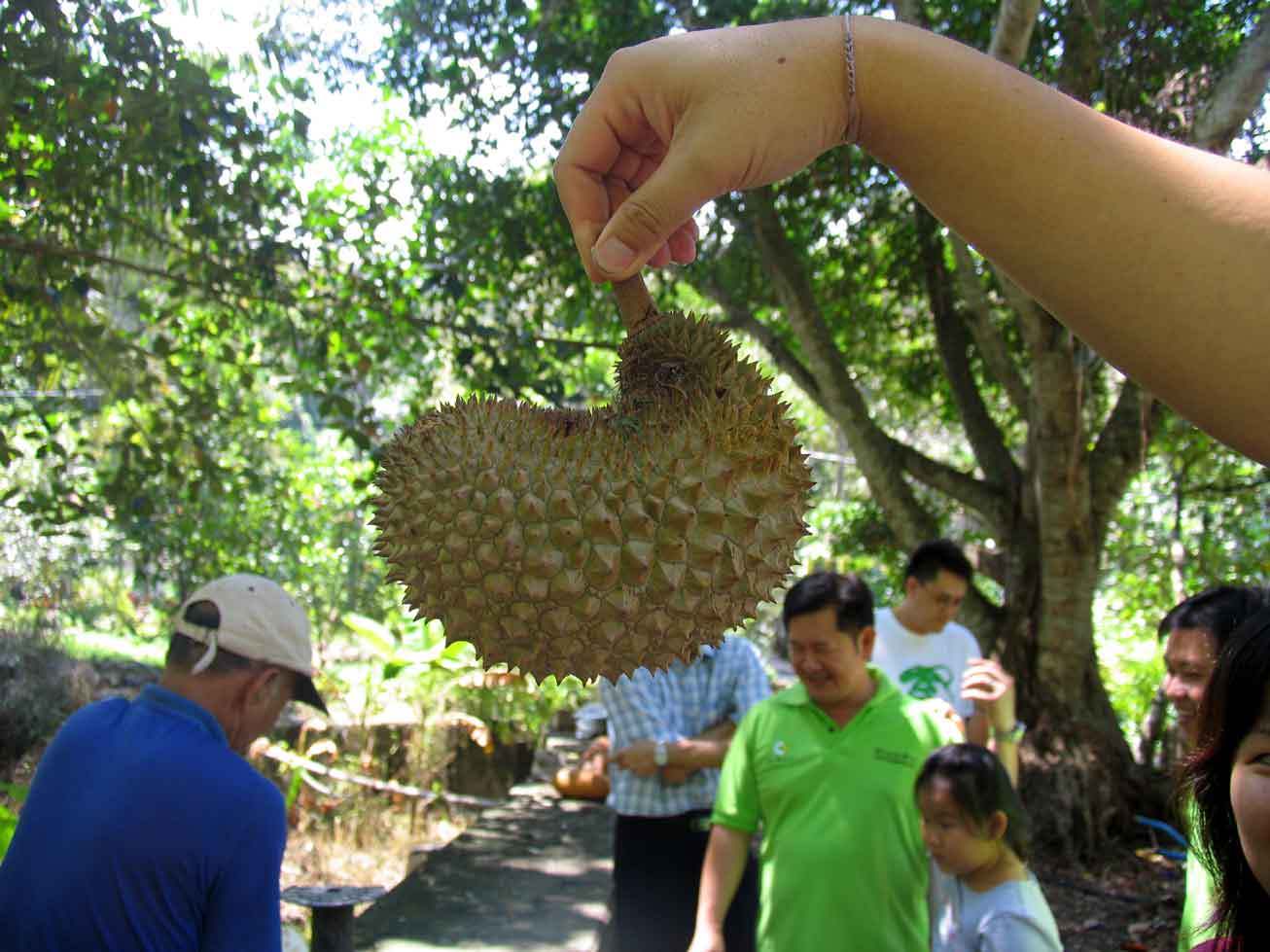 Unique shaped durian