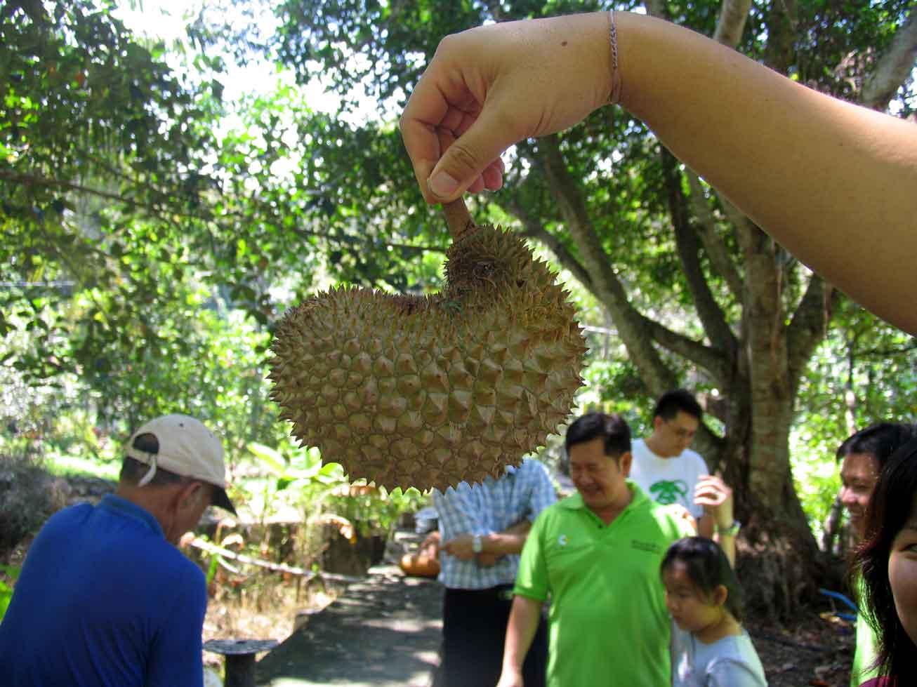 Unique shaped durian