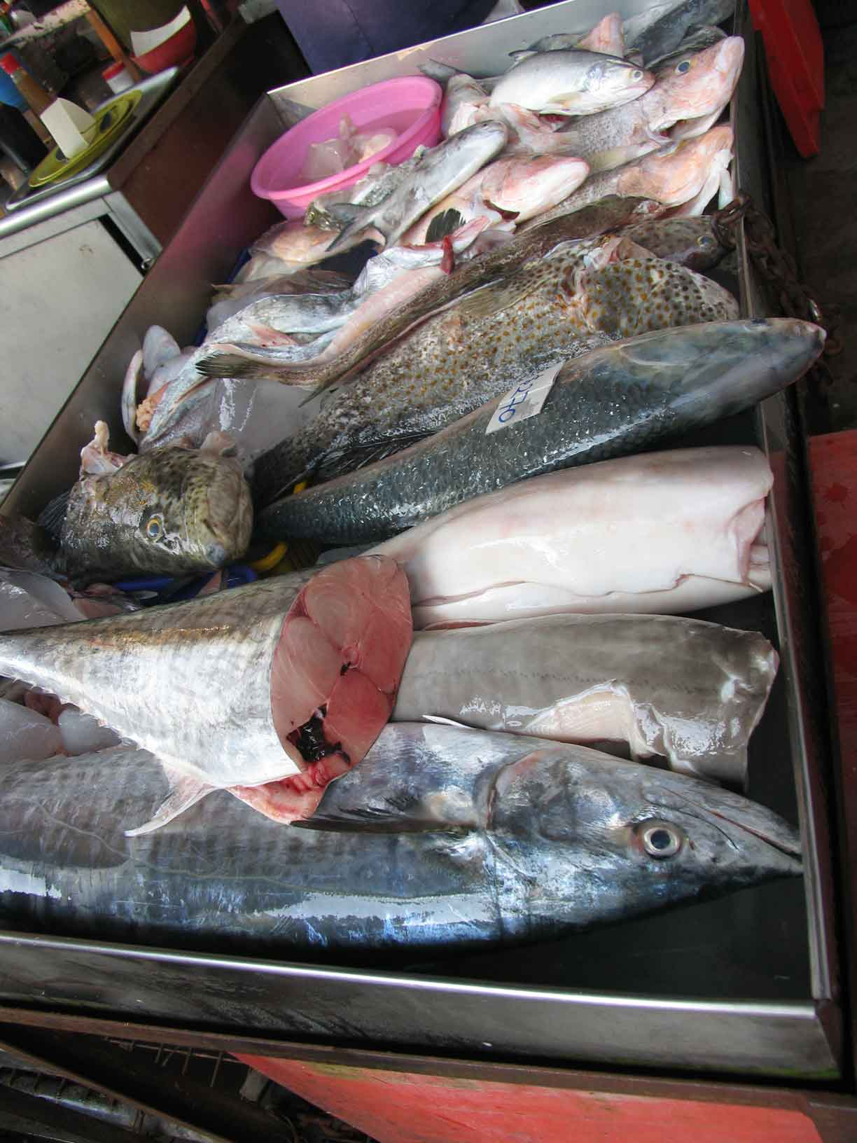 Terubong fresh fish